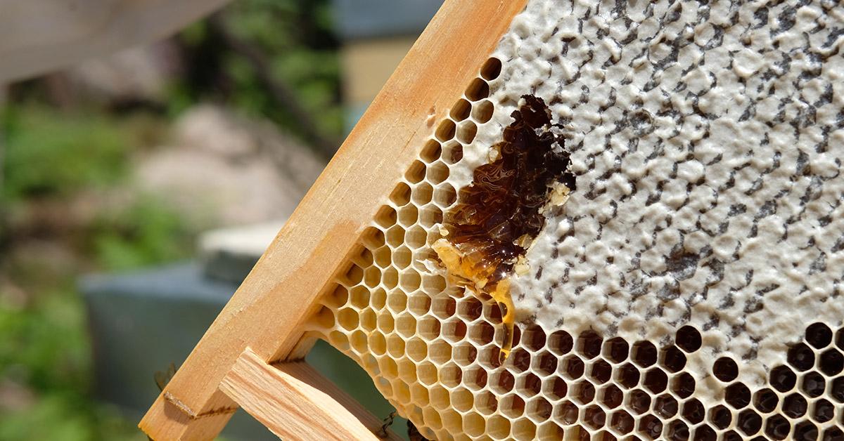 Bienfaits et vertus du miel